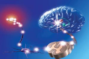 המוח וחוט השדרה פגיעה במערכת העצבים המרכזית או הפריפרית