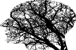 מערכת העצבים סובלת משבץ מוחי